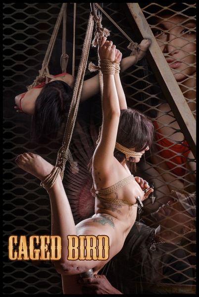 (22.04.2015) Caged Bird – Gabriella Paltrova – BDSM, Bondage